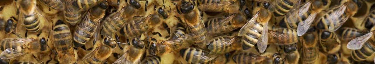 York County Beekeepers Association